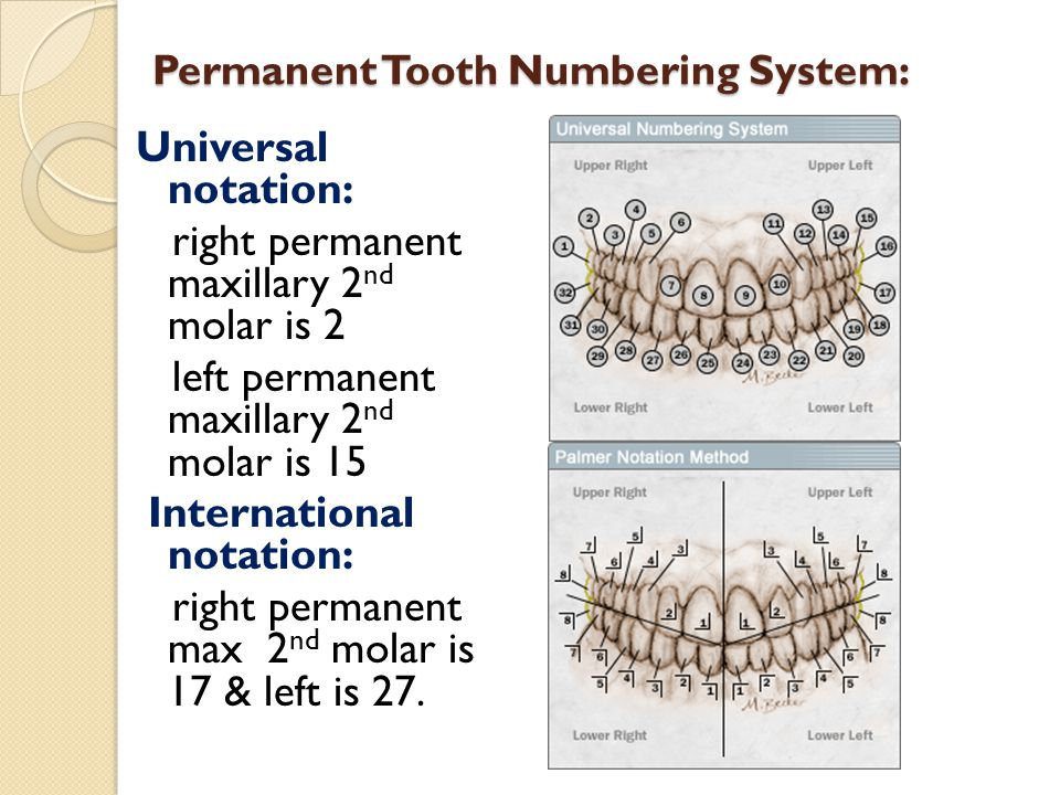 Permanent Tooth Numbering System: