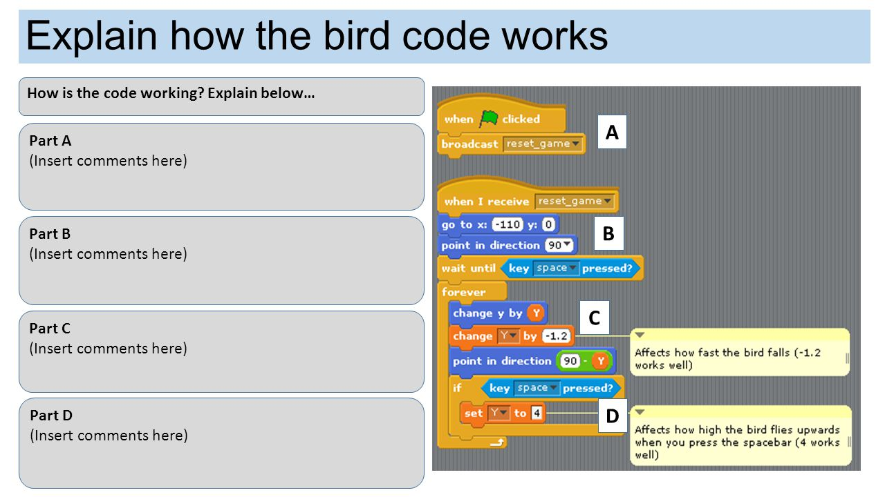 Explain how the bird code works