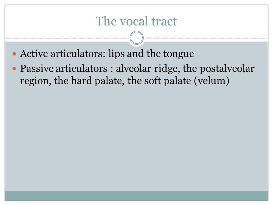 The vocal tract Active articulators: lips and the tongue