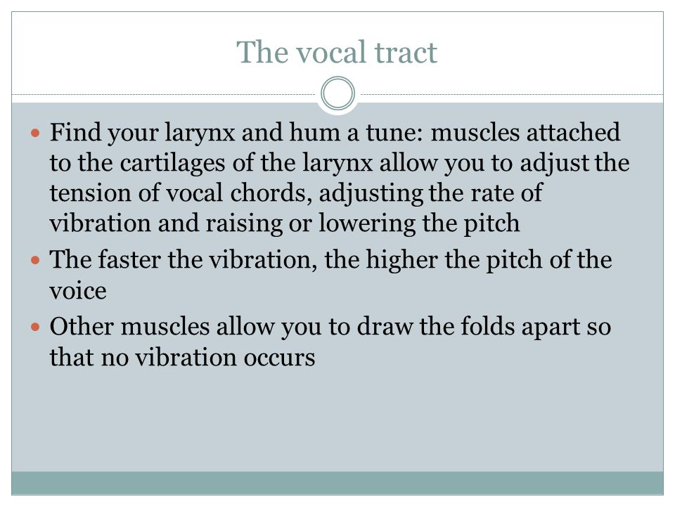 The vocal tract