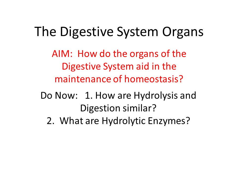 The Digestive System Organs