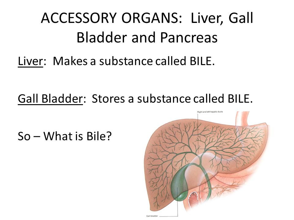 ACCESSORY ORGANS: Liver, Gall Bladder and Pancreas