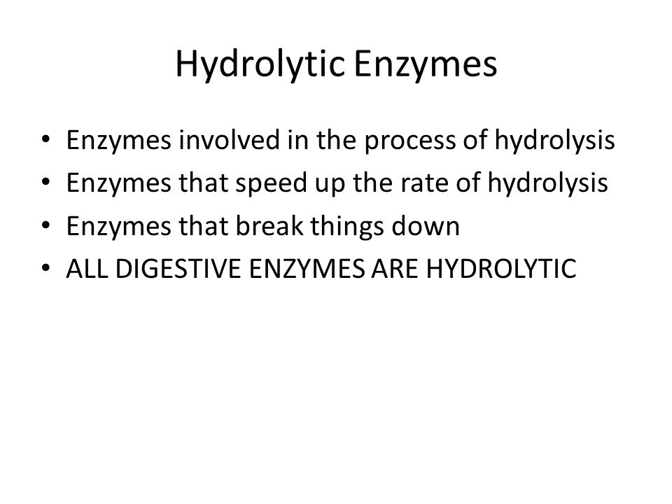 Hydrolytic Enzymes Enzymes involved in the process of hydrolysis