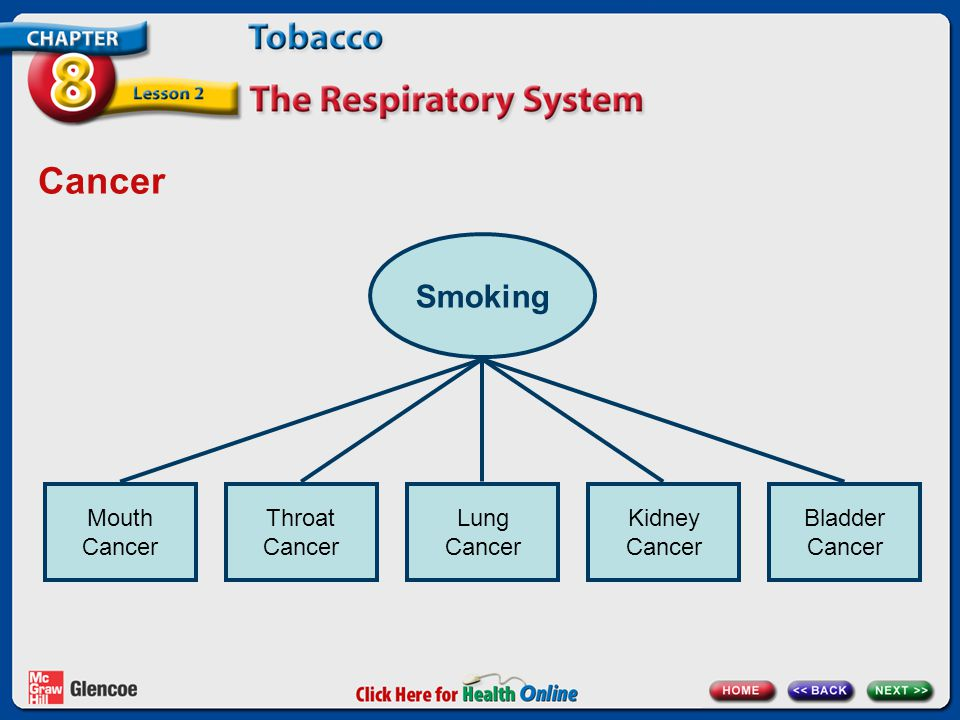 Cancer Smoking Mouth Cancer Throat Cancer Lung Cancer Kidney Cancer