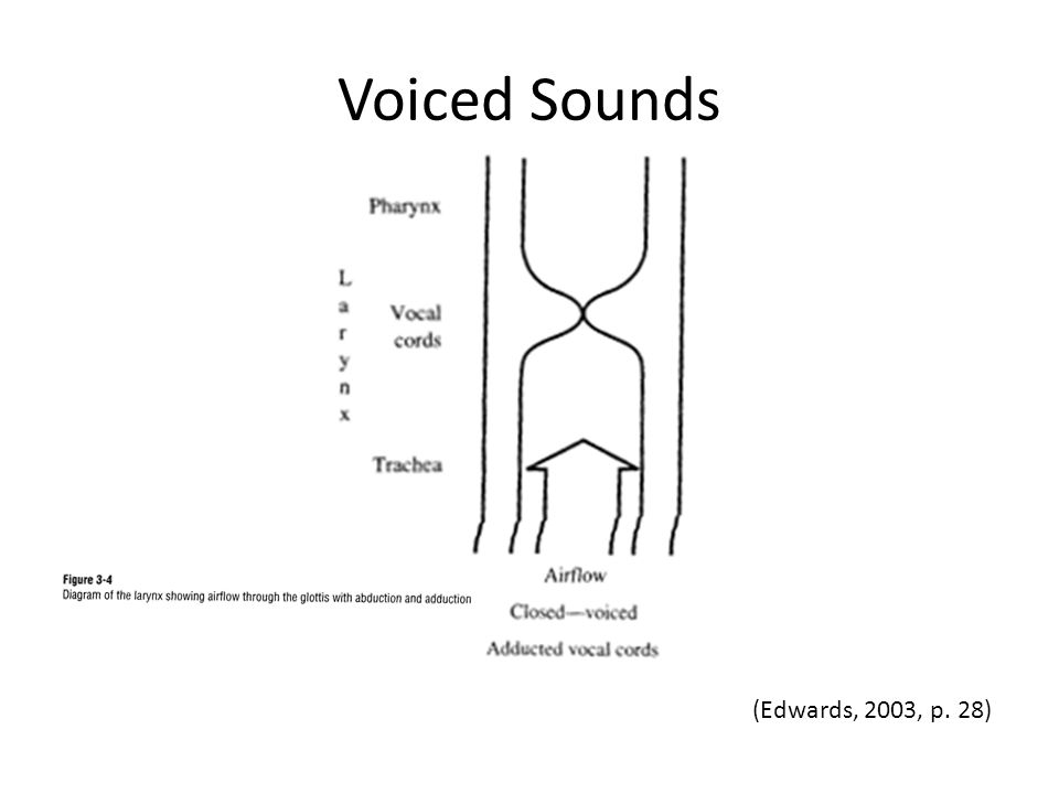 Voiced Sounds (Edwards, 2003, p. 28)