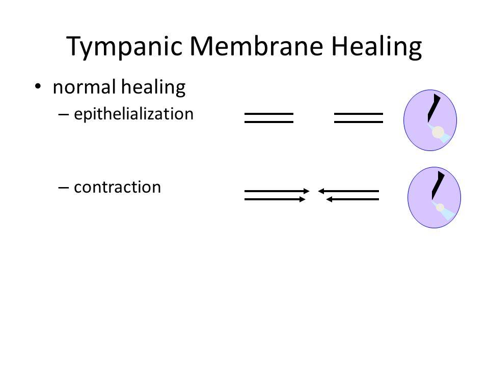 Tympanic Membrane Healing