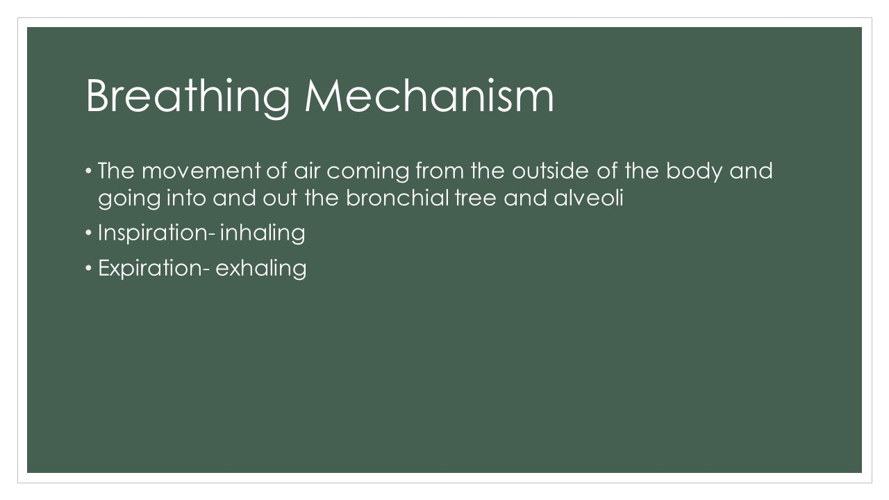 Breathing Mechanism The movement of air coming from the outside of the body and going into and out the bronchial tree and alveoli.