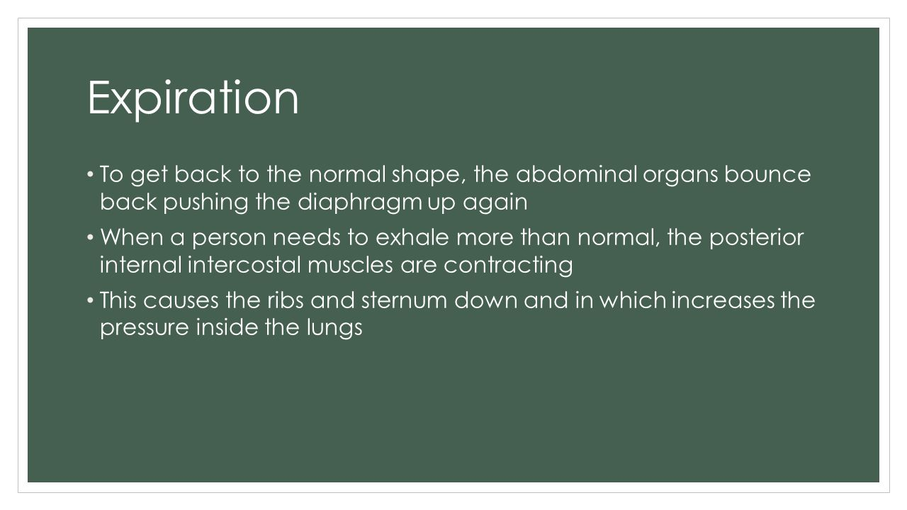 Expiration To get back to the normal shape, the abdominal organs bounce back pushing the diaphragm up again.
