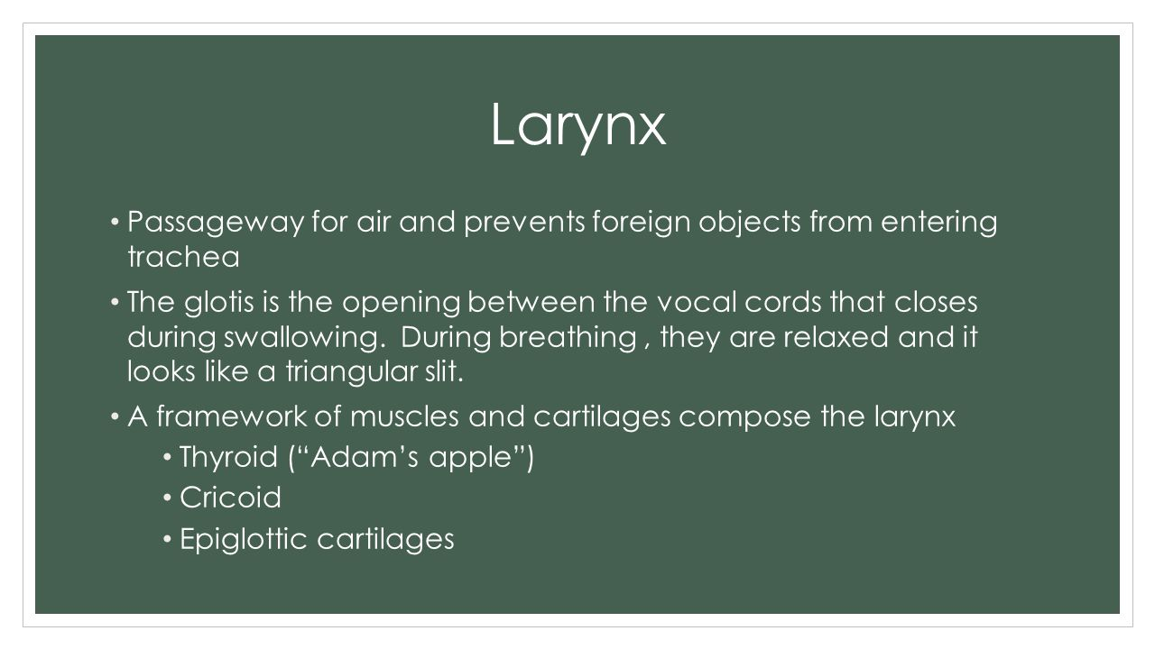 Larynx Passageway for air and prevents foreign objects from entering trachea.
