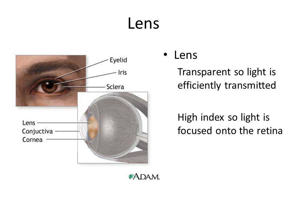 Lens Lens Transparent so light is efficiently transmitted
