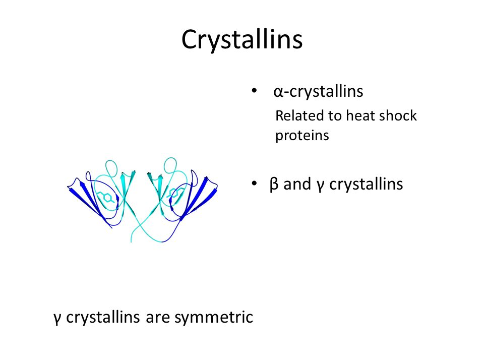 Crystallins α-crystallins β and γ crystallins