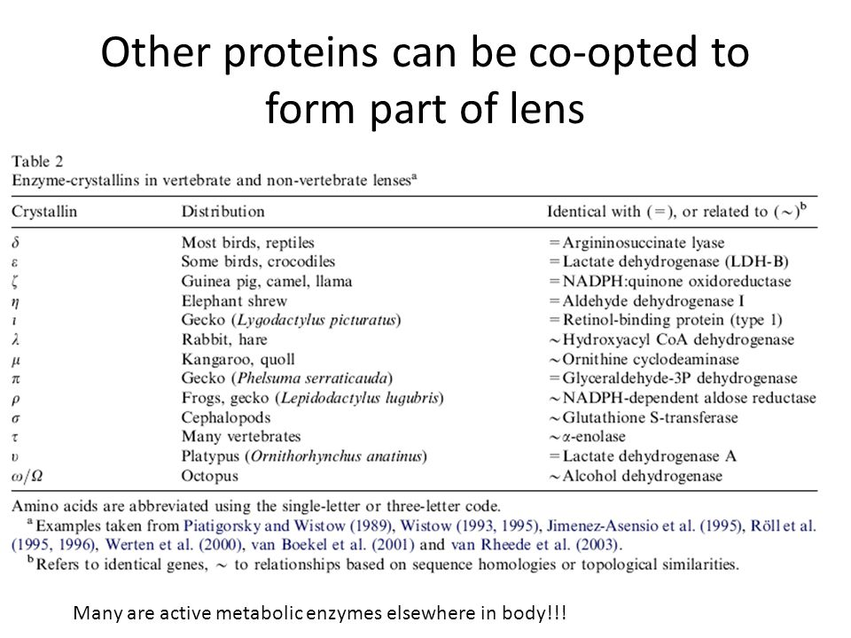 Other proteins can be co-opted to form part of lens