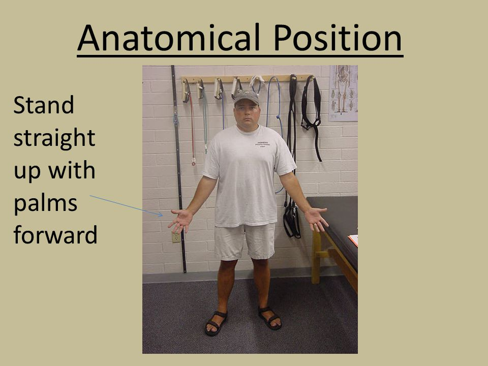 Anatomical Position Stand straight up with palms forward