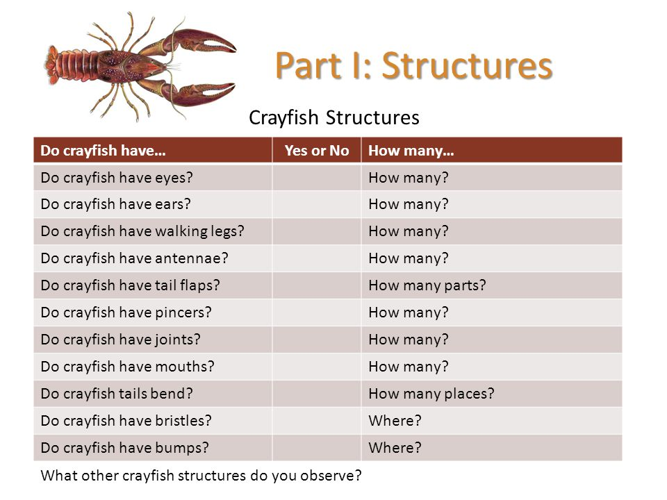 Part I: Structures Crayfish Structures Do crayfish have… Yes or No