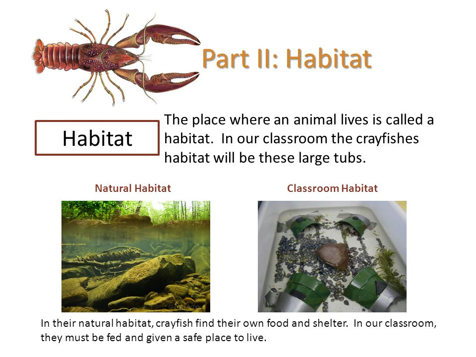 Part II: Habitat Habitat