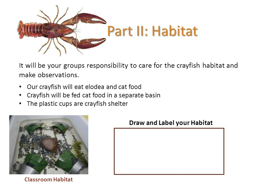 Draw and Label your Habitat