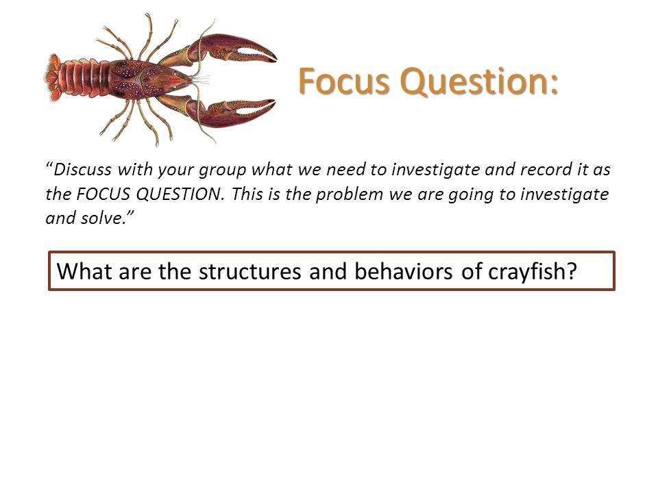 Focus Question: What are the structures and behaviors of crayfish
