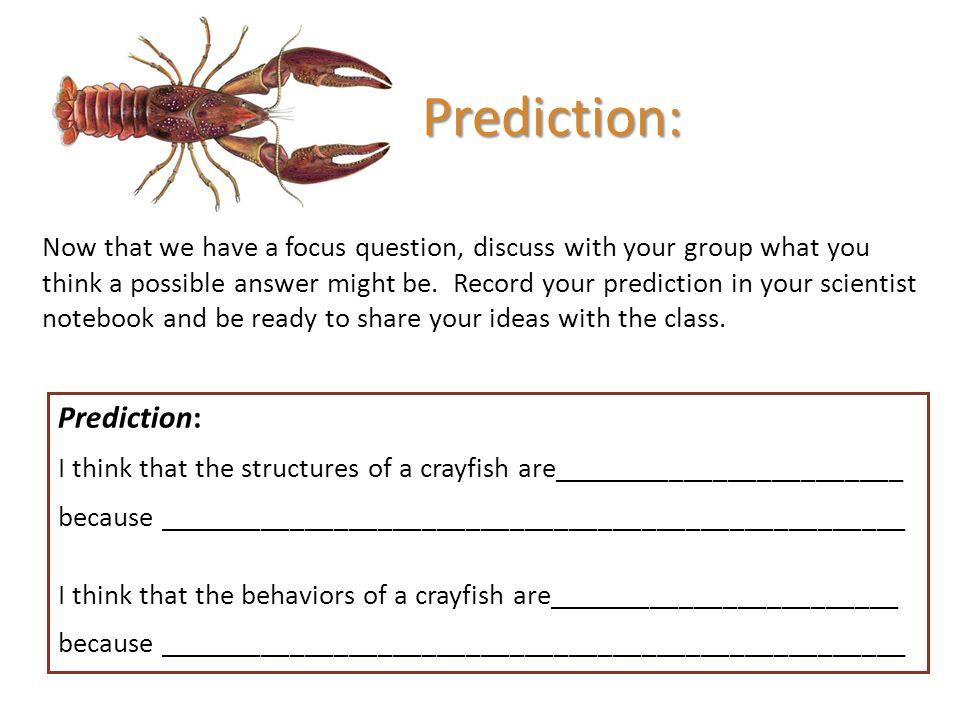 Prediction: Prediction: