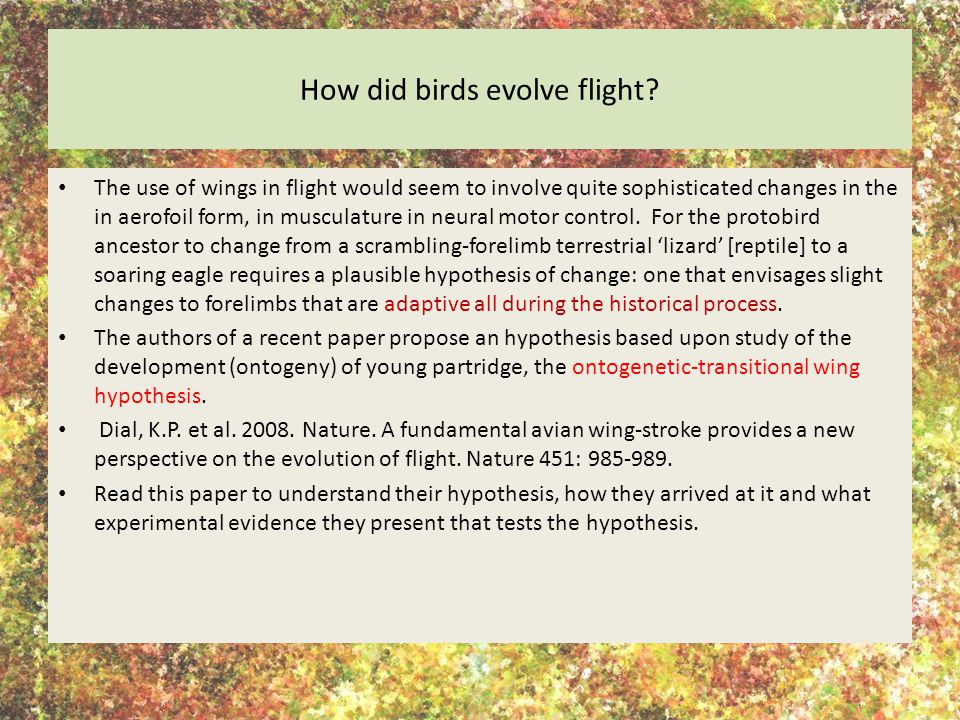 How did birds evolve flight