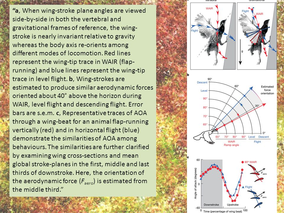 a, When wing-stroke plane angles are viewed side-by-side in both the vertebral and gravitational frames of reference, the wing-stroke is nearly invariant relative to gravity whereas the body axis re-orients among different modes of locomotion.