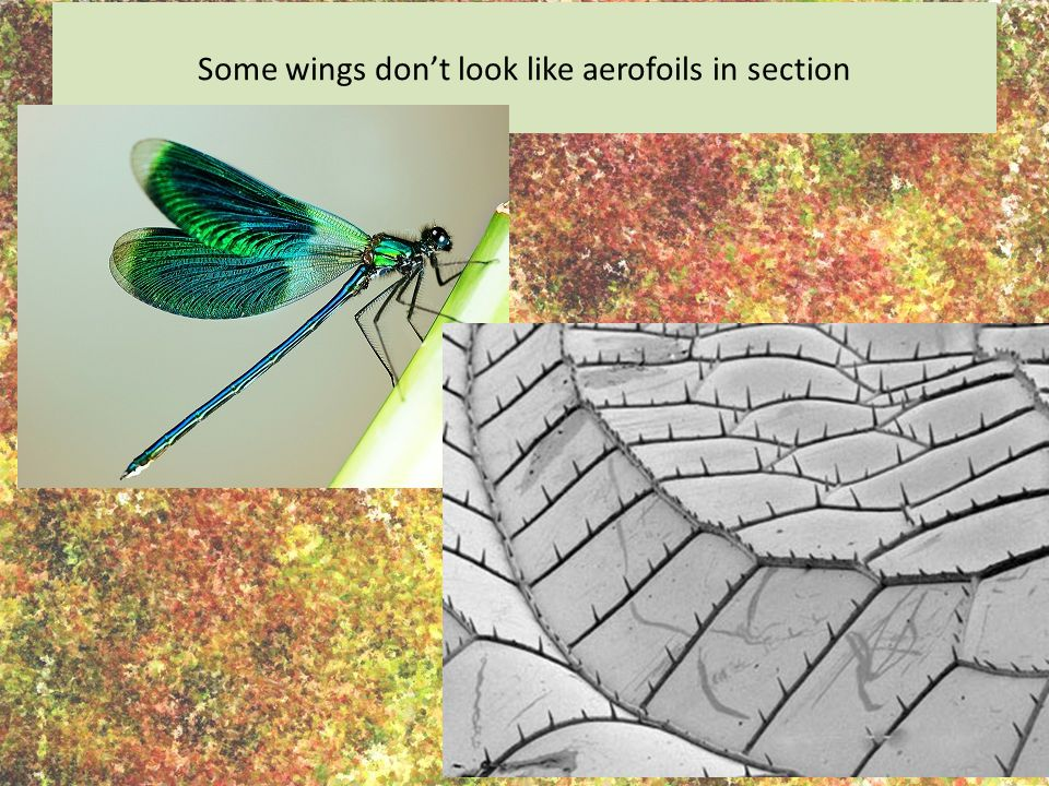 Some wings don't look like aerofoils in section