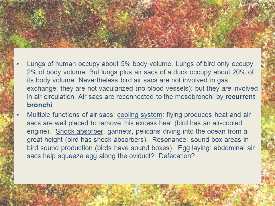 Lungs of human occupy about 5% body volume