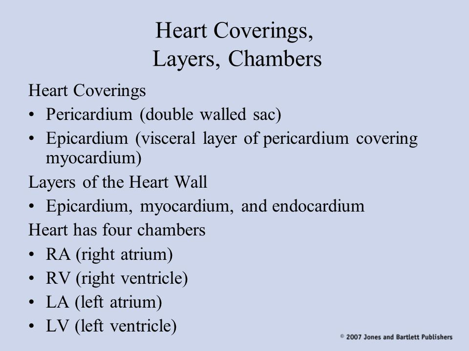 Heart Coverings, Layers, Chambers