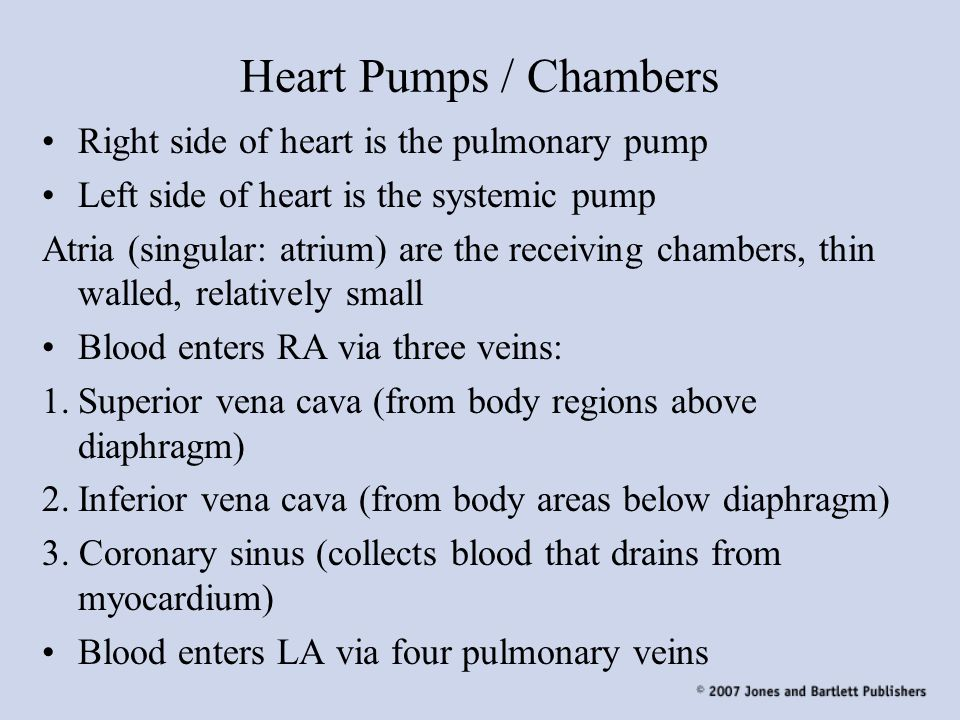 Heart Pumps / Chambers Right side of heart is the pulmonary pump