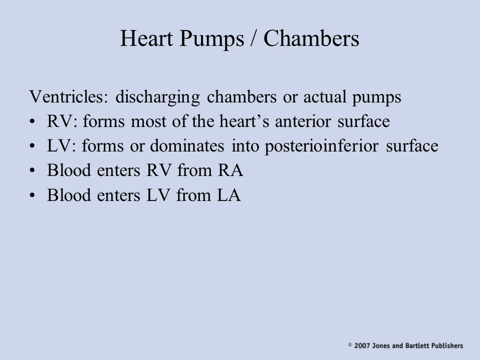 Heart Pumps / Chambers Ventricles: discharging chambers or actual pumps. RV: forms most of the heart's anterior surface.