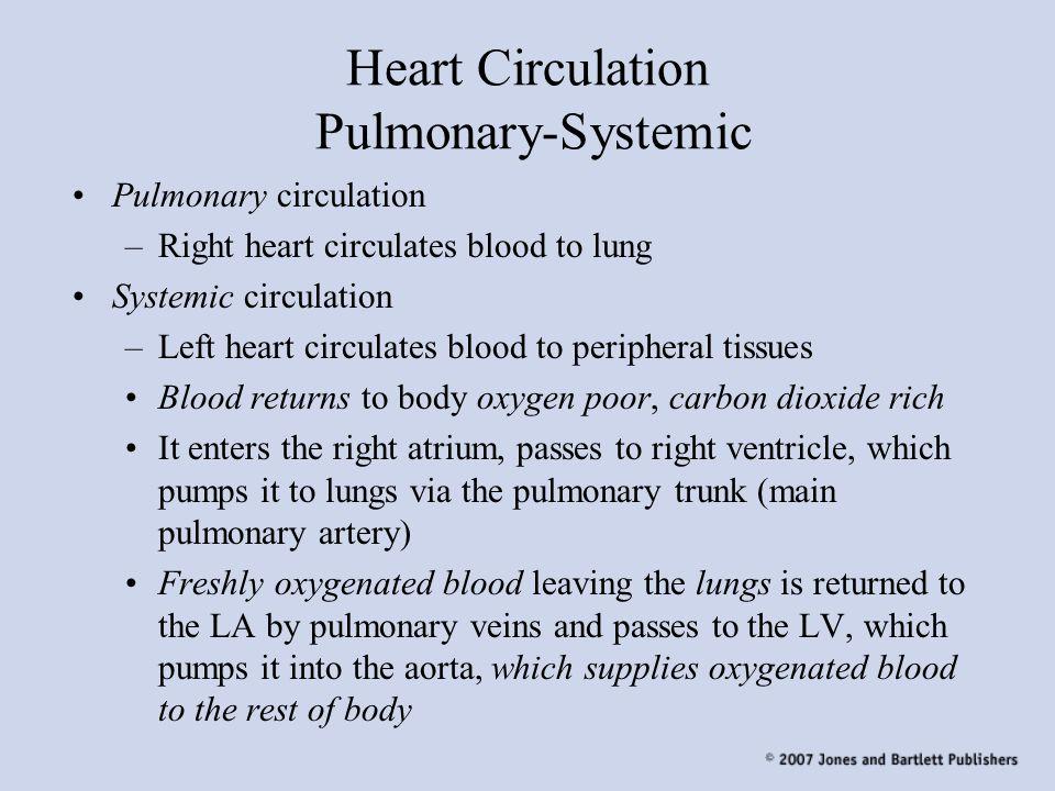 Heart Circulation Pulmonary-Systemic