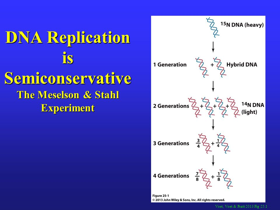 semiconservative replication involves a template what is the template - dna replication repair student edition 9 27 13 ppt