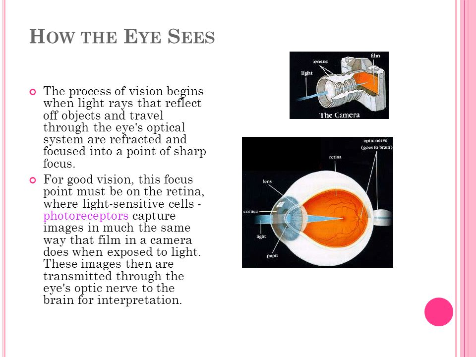 How the Eye Sees