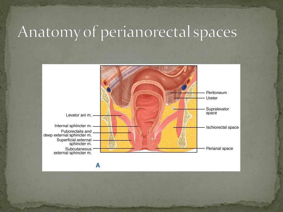 Anatomy of perianorectal spaces