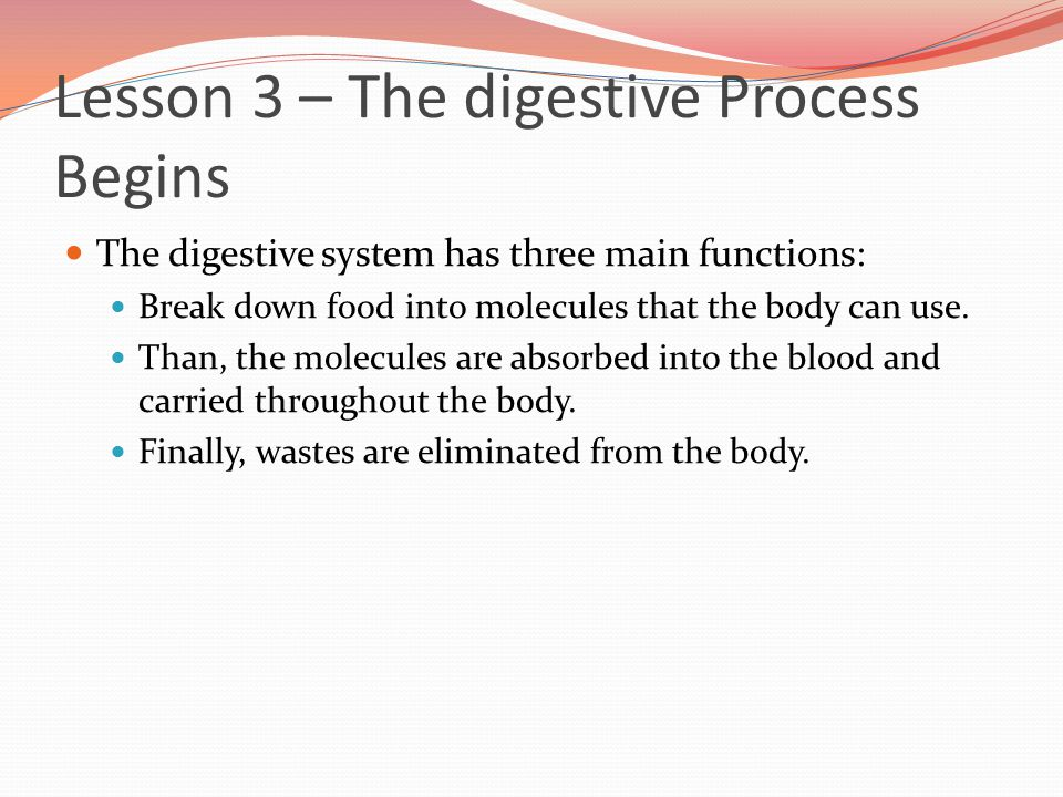 Lesson 3 – The digestive Process Begins