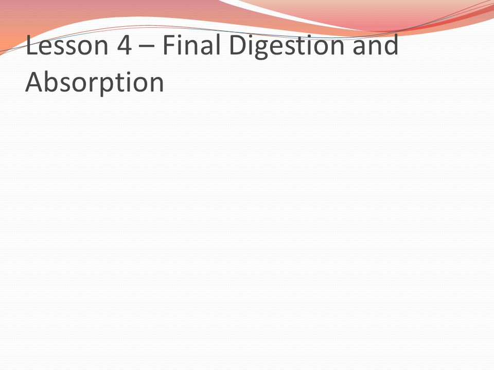 Lesson 4 – Final Digestion and Absorption