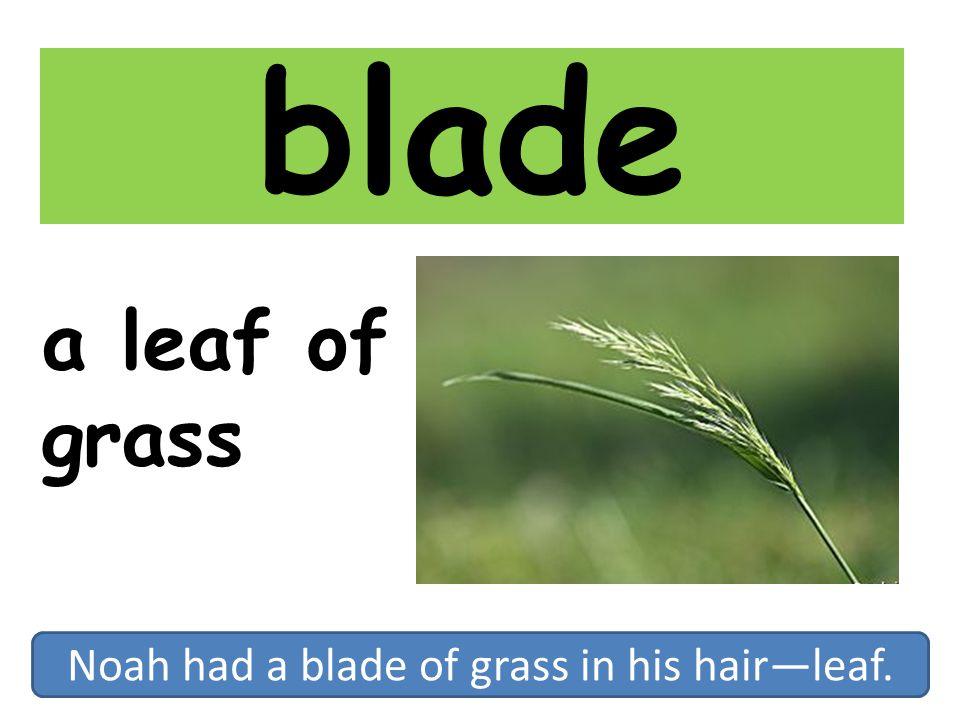 Noah had a blade of grass in his hair—leaf.