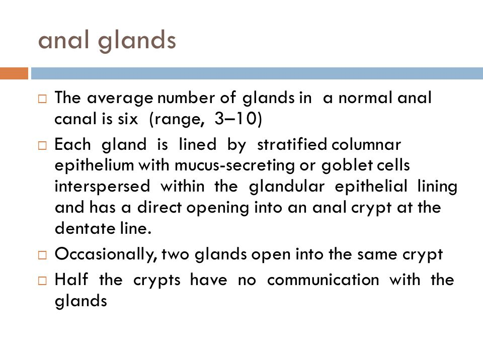 anal glands The average number of glands in a normal anal canal is six (range, 3–10)