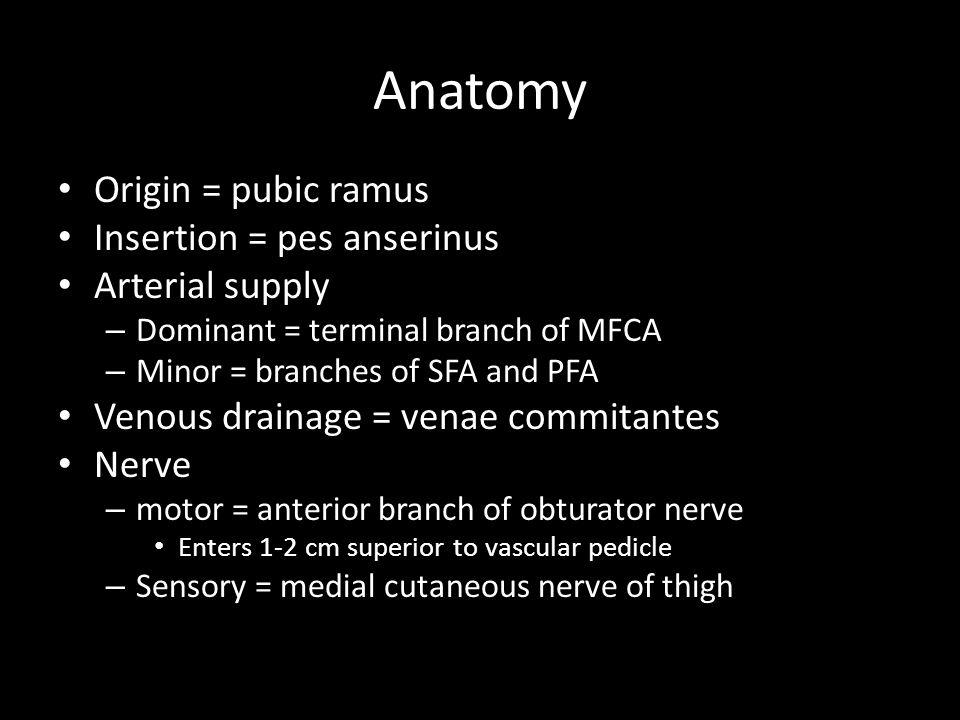 Anatomy Origin = pubic ramus Insertion = pes anserinus Arterial supply