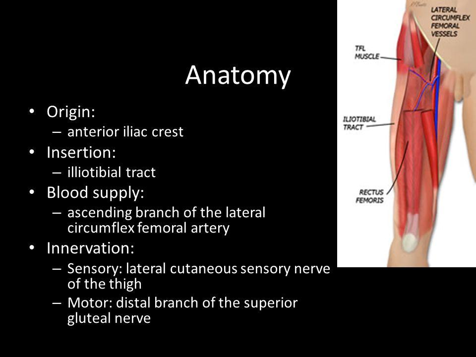 Anatomy Origin: Insertion: Blood supply: Innervation: