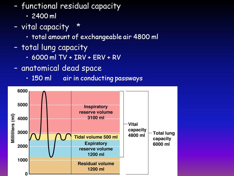 functional residual capacity vital capacity * total lung capacity