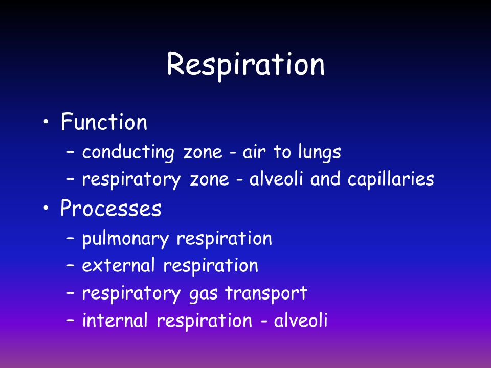 Respiration Function Processes conducting zone - air to lungs