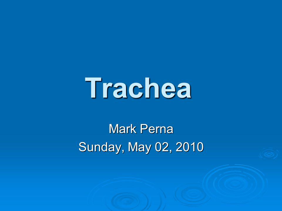 Trachea Mark Perna Sunday, May 02, 2010