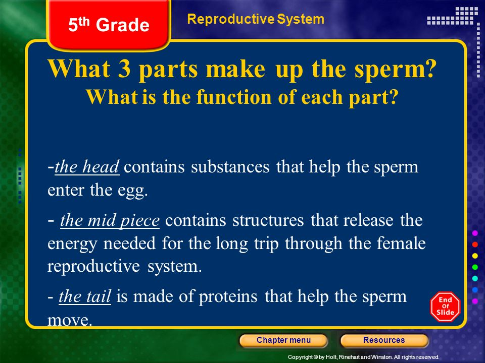 What 3 parts make up the sperm What is the function of each part