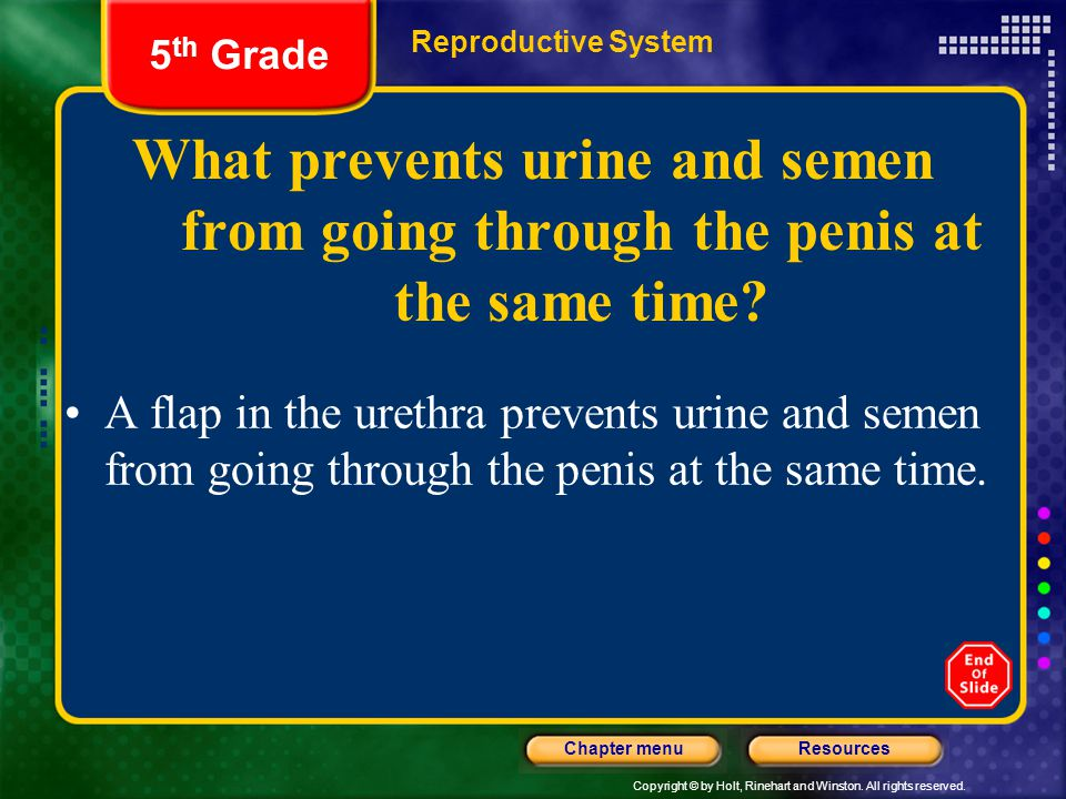 5th Grade Reproductive System. What prevents urine and semen from going through the penis at the same time
