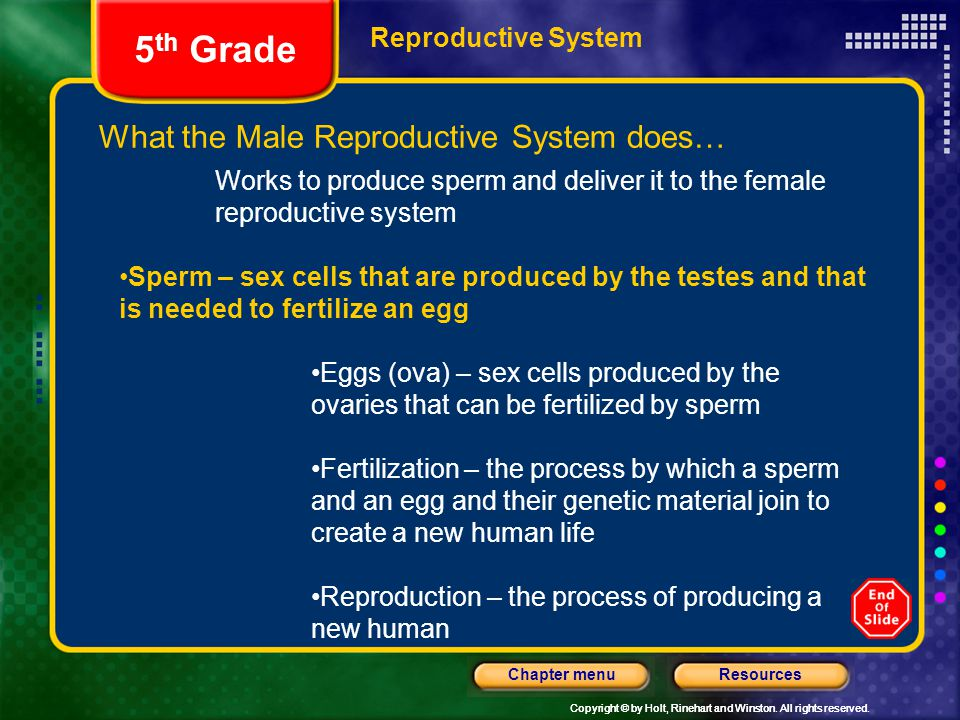 5th Grade What the Male Reproductive System does… Reproductive System