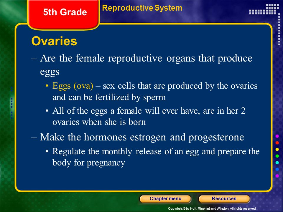 Ovaries Are the female reproductive organs that produce eggs