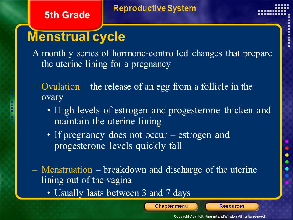 Reproductive System 5th Grade. Menstrual cycle. A monthly series of hormone-controlled changes that prepare the uterine lining for a pregnancy.
