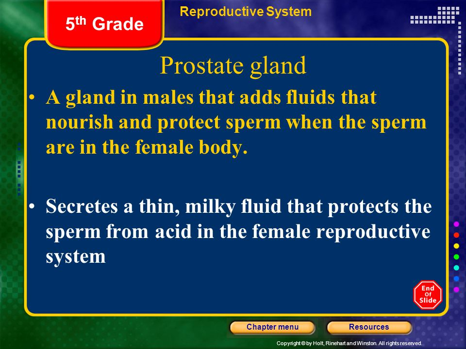 Reproductive System 5th Grade. Prostate gland.