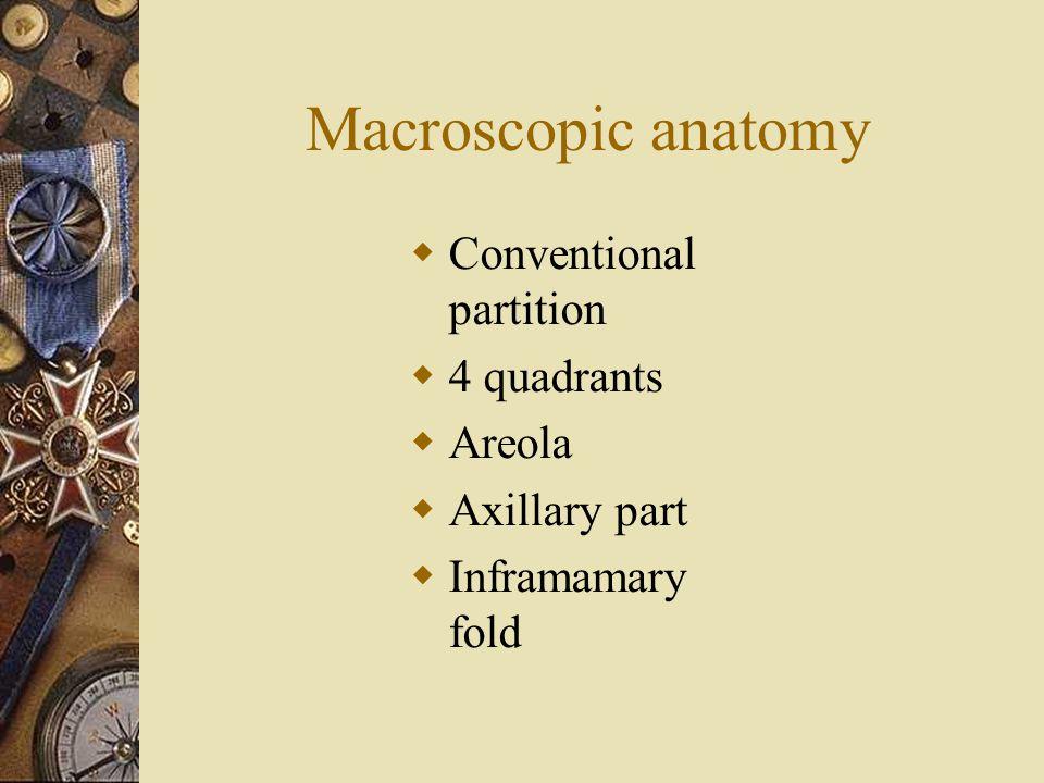 Macroscopic anatomy Conventional partition 4 quadrants Areola