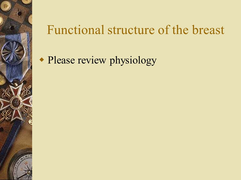 Functional structure of the breast